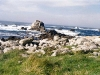 ouessant10